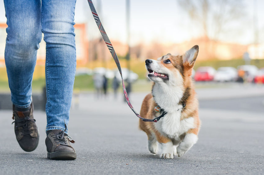 taking a dog out for a walk
